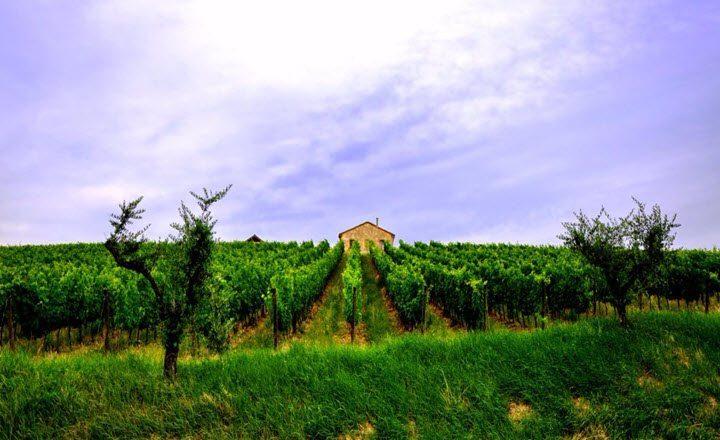 Vindistriktet Emilia Romagna i Italia