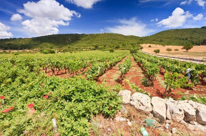 Vindistriktet Puglia i Italia