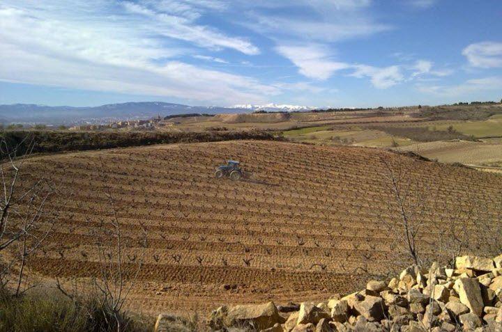 Vindistriktet Navarra i Spania