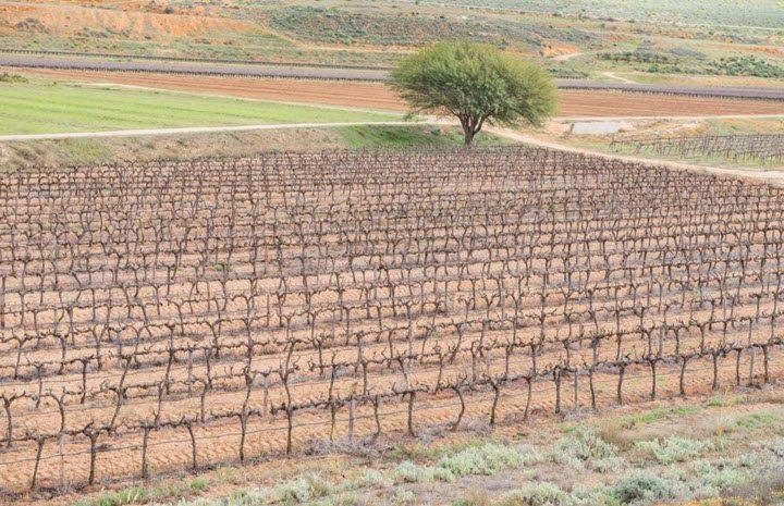 Vindistriktet Swartland i Sør-Afrika