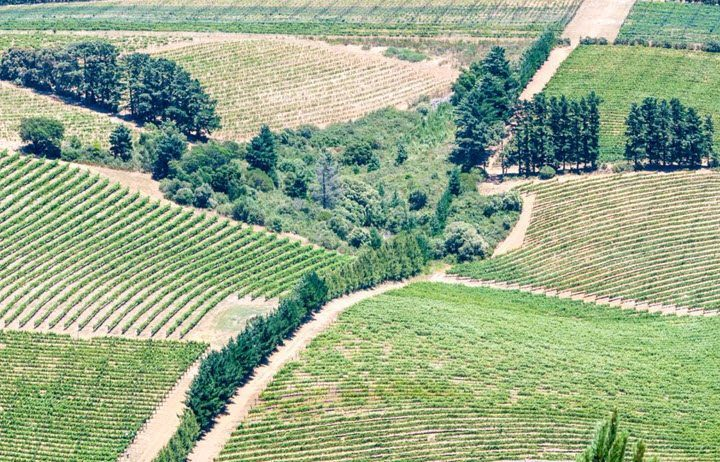Vinregionen Western Cape i Sør-Afrika