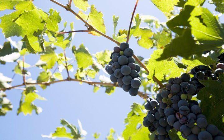 Vindistriktet La Rioja i Argentina