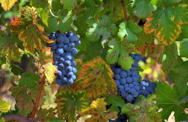 Ikonisk vin fra Piemonte – Giuseppe Rinaldi
